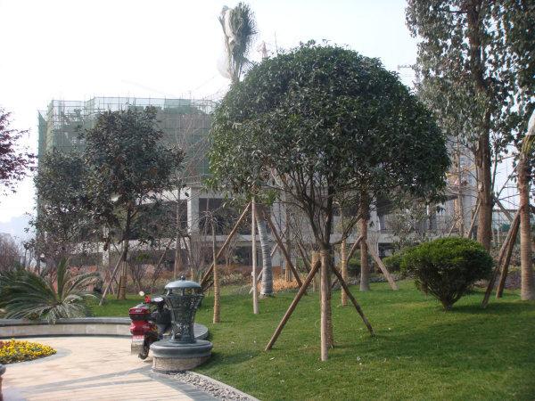 成都香榭国际外景图
