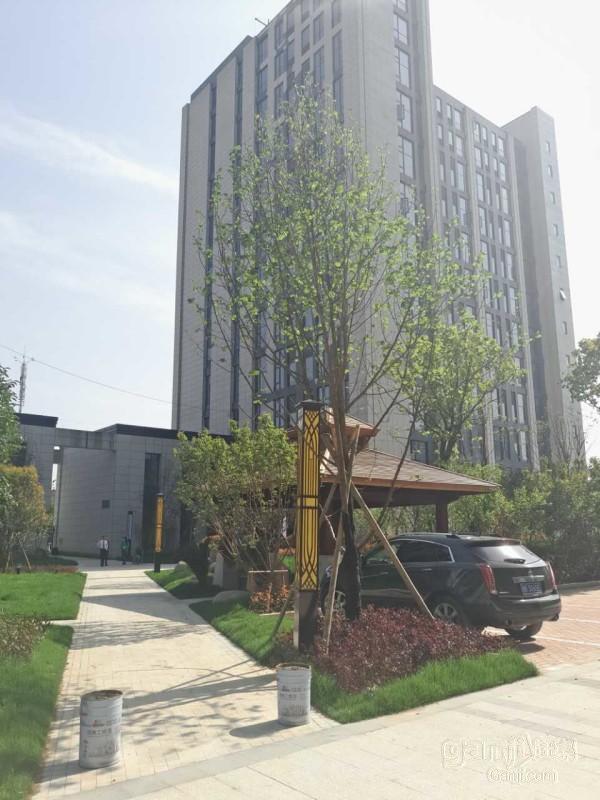 推推99房产网西溪乐天城在售新房房源图片
