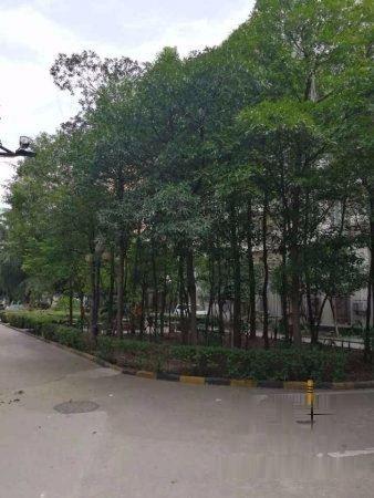 推推99武汉房产网欧洲花园外景图